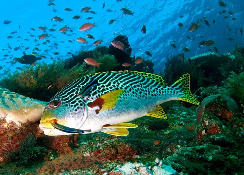 marine_life extinction