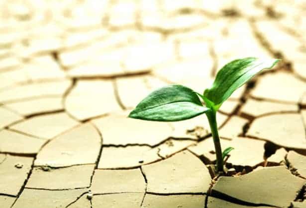 plant resistant drought