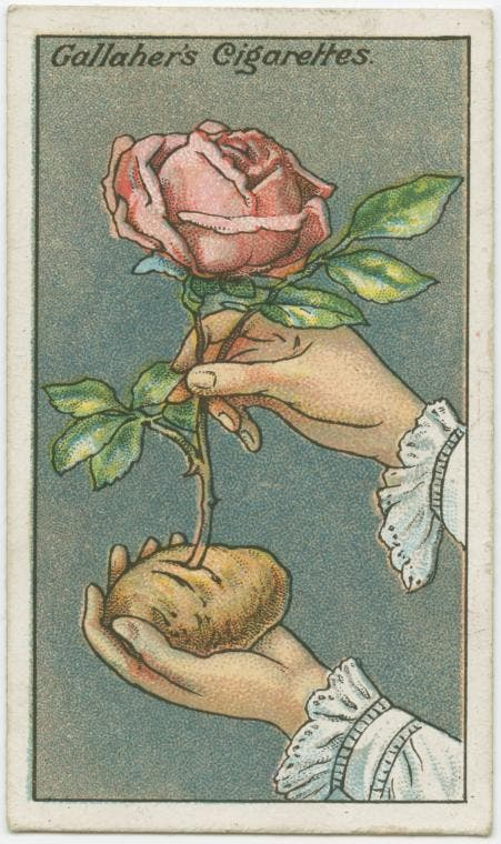 tips flowers