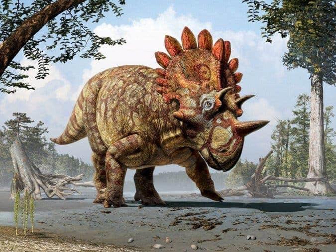 Artist impression of Regaliceratops peterhewsi. Image: Julius T. Csotonyi/Royal Tyrrell Museum, Drumheller, Alberta