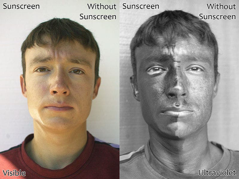 . The man's face has sunscreen on his right only. The left image is a regular photograph of the face; the right image is taken by reflected UV light. The side of the face with sunscreen is darker because the sunscreen absorbs the UV light. Image: Wikipedia