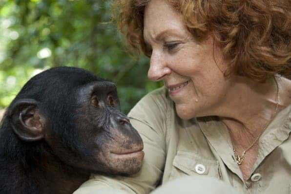 "Claudine Andre, the founder of Lola ya bonobo, and the ""friends of the bonobos of the Congo', an NGO which works in DRC with Timbo, one of her best bonobo friends. Photo courtesy of Christian Ziegler."