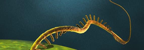 A strand of RNA Image via: miltenyibiotec.com
