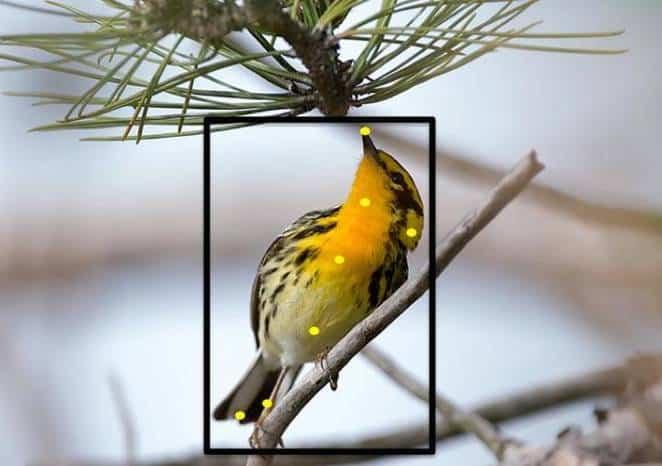 Merlin birdwatch