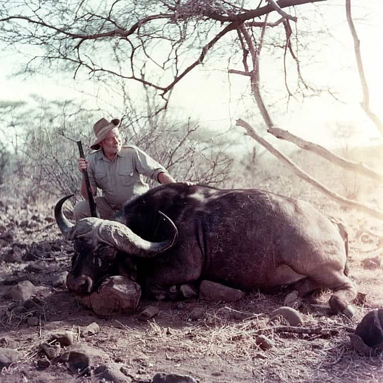 Ernest Hemingway poses with a water buffalo in Africa, 1953-1954.