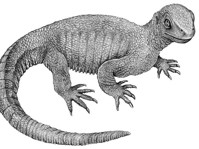 How The Turtle Got Its Shell Missing Link Ancestor Shows How