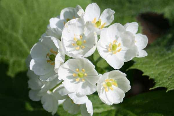 Skeleton flower turns translucent when it comes in contact with water mightylinksfo