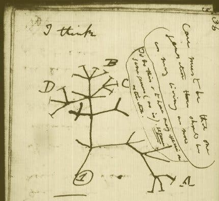"Drawing from Charles Darwin's notes which he used to elaborate his seminal work, ""On The Origins of Species""."