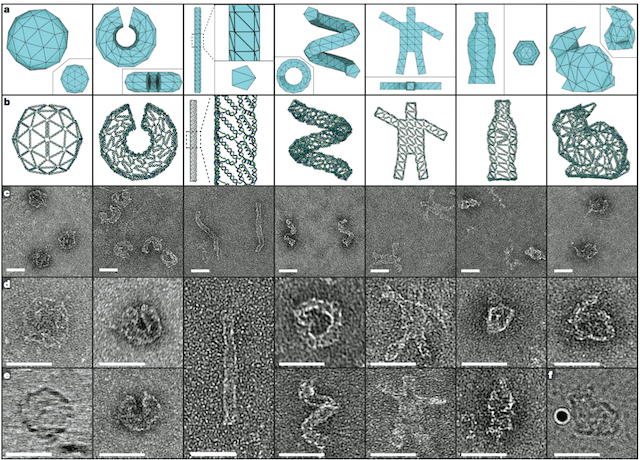 Some of the shapes the researchers printed using DNA. Högberg et al, 2015