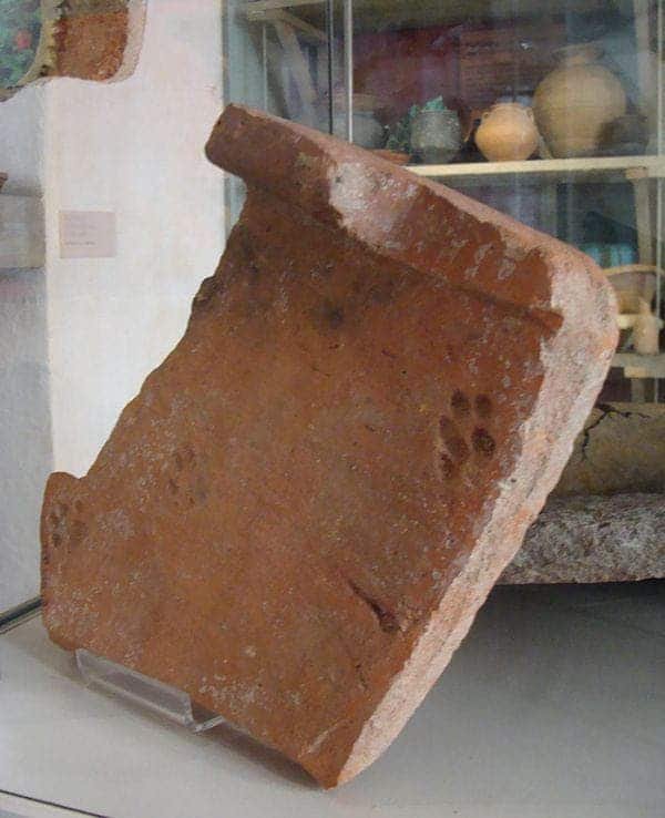 Year Old Cat Pawprint Found In Roman Tile