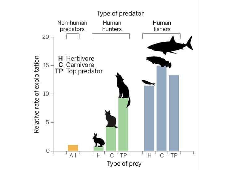 predator chart