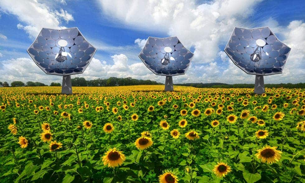 Artist impression of Solar Sunflowers next to the plant variety. Image: Airlight Energy