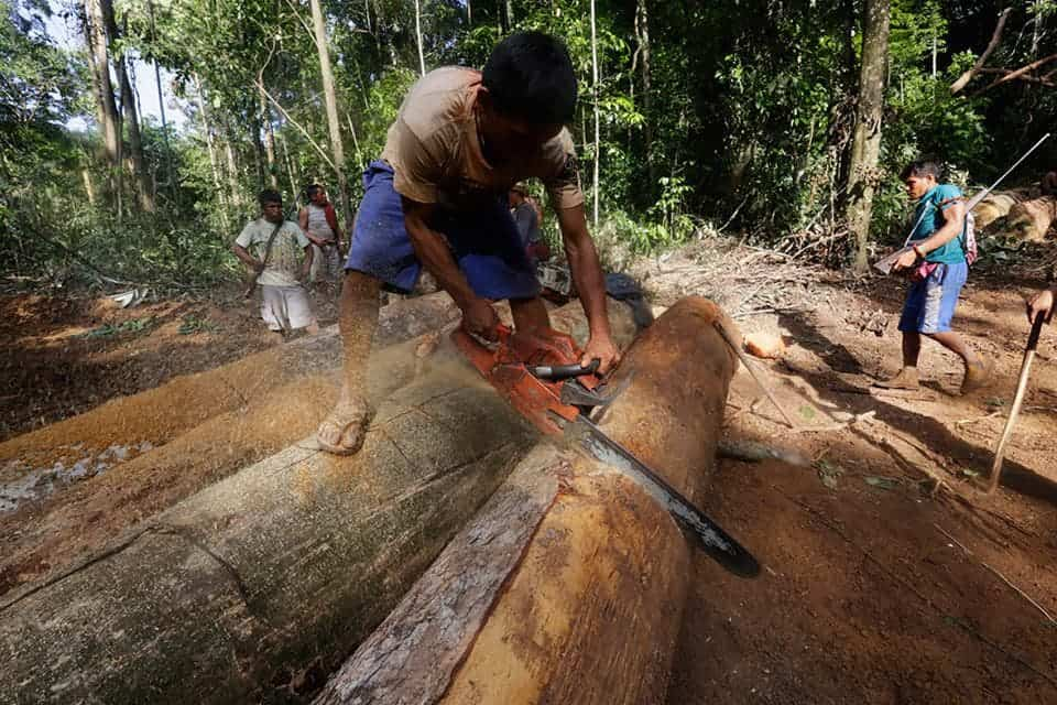an argument against the brazilian governments destruction of the amazon forest Essays & papers how is the amazon rainforest the arguments for and against deforestation the brazilian government and millions of local people is vital if we.