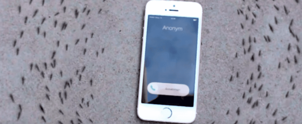 watch how ants react to a ringing iphone. Black Bedroom Furniture Sets. Home Design Ideas