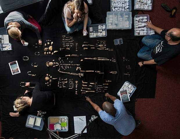 The team lays out fossils of Homo naledi at the University of the Witwatersrand's Evolutionary Studies Institute. Photograph: Robert Clark/National Geographic
