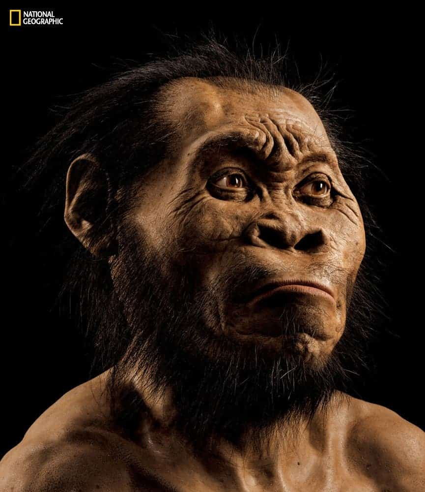 An artist impression of how Homo naledi must have looked like based on skull scans. Image:  Mark Thiessen/National Geographic