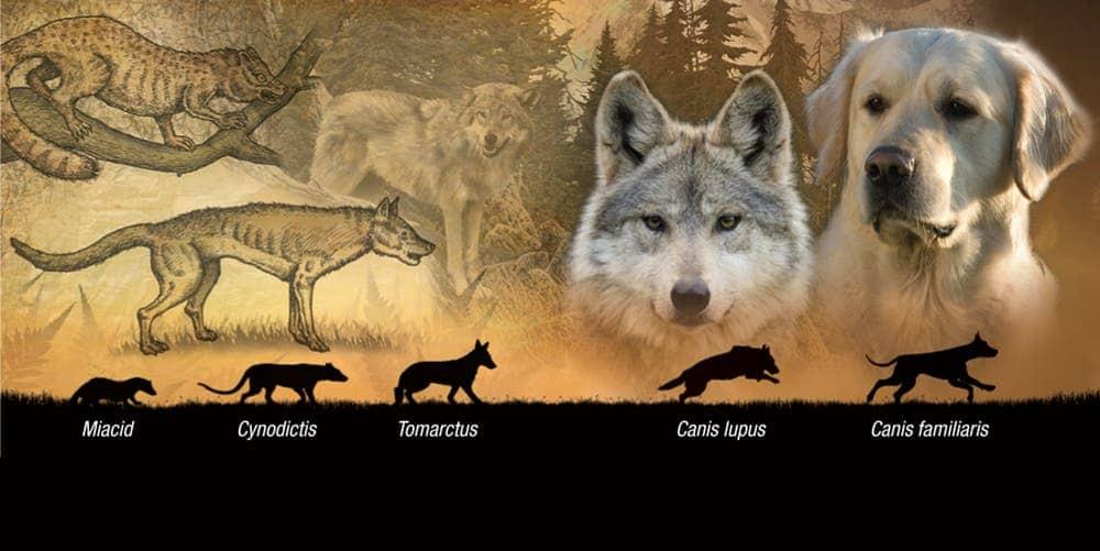 dog evolution