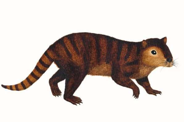 Artist impression of Kimbetopsalis. Credit: Sarah Shelley