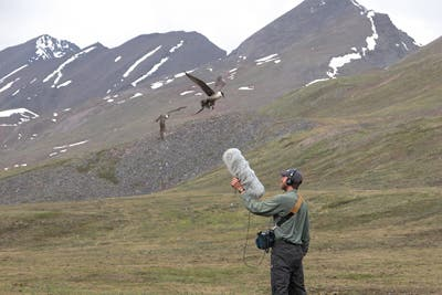 Gerrit Vyn, is a multimedia producer on Cornell's Lab of Ornithology staff, recording natural sounds in Alaska. Image: Mike Anderson