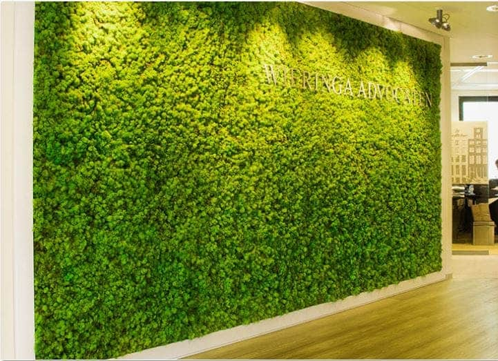 Green wall in preserved moss