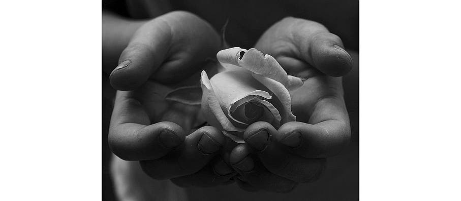 rose in hand: permission D Sharon Pruitt