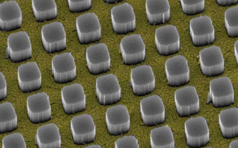 Silicon pillars emerge from nanosize holes in a thin gold film. The pillars funnel 97 percent of incoming light to a silicon substrate, a technology that could significantly boost the performance of conventional solar cells. Credit: Vijay Narasimhan, Stanford University