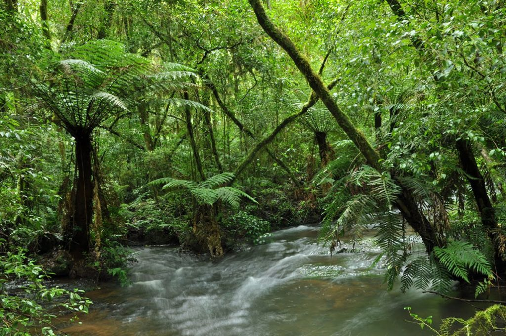 The Atlantic Forest is now designated a World Biosphere Reserve, which contains a large number of highly endangered species.