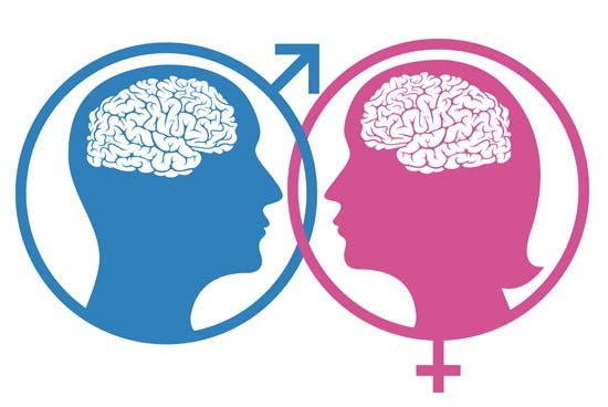 Male Female Brain