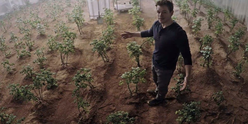 Watney with his beloved potato crop on Mars. Credit: 20th Century Fox
