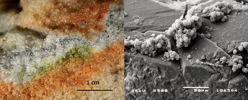 Section of rock coloniszed by cryptoendolithic microorganisms and the Cryomyces fungi in quartz crystals under an electron microscope. Credit: S. Onofri et al. Read more at: http://phys.org/news/2016-01-antarctic-fungi-survive-martian-conditions.html#jCp