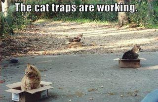 cat-boxes4