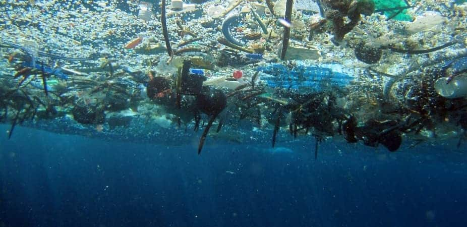 Underneath the floating debris in the Pacific Ocean. Credit: NOAA - Marine Debris Program