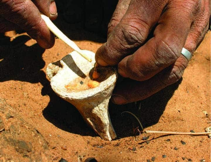 Hunter  squeezing the contents of leaf beetle larvae onto giraffe bone to prepare arrow poison. Image: Caroline S. Chaboo