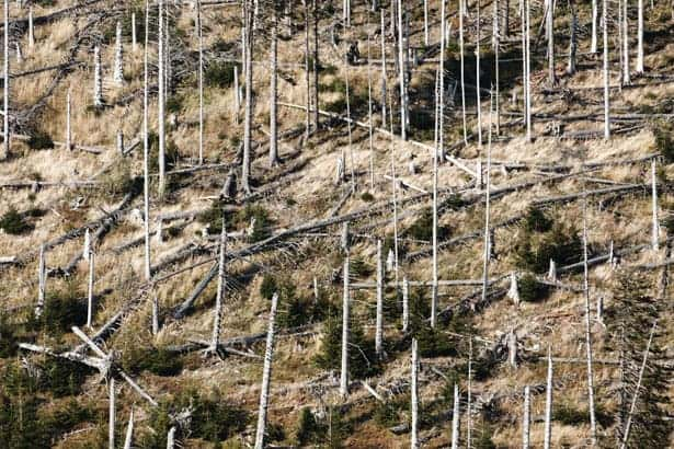 forest damage after a hurricane