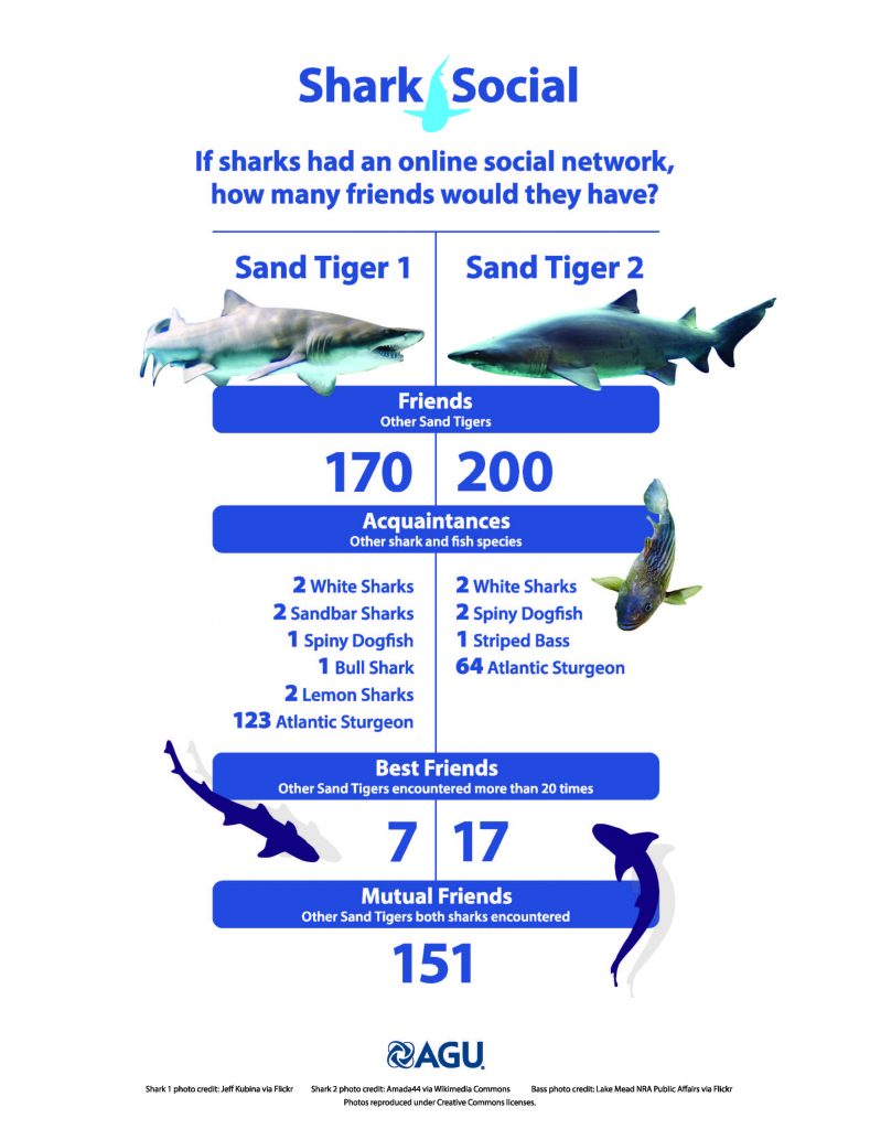 sharks_infographic