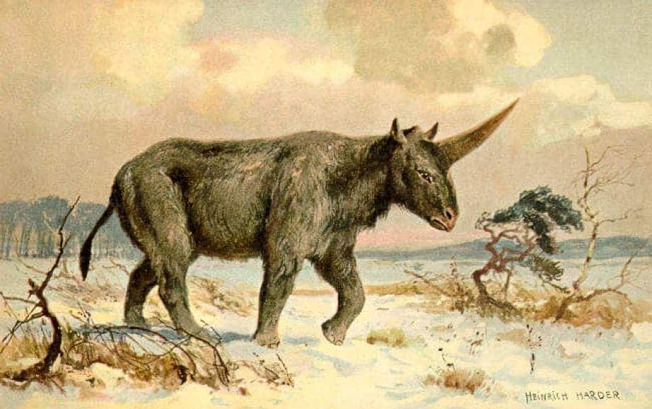 The Siberian unicorn is related to the rhino, was the size of a woolly mammoth, had fur and walked like a horse. Its horn was very long and blade-like. You won't want to hug this unicorn. Credit: Heinrich Harder, Wikimedia Commons
