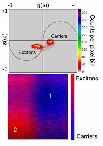 (Top) A phasor plot of the transient absorption data shows the presence of free charges and excitons; a false colored image shows their contributions at different spatial positions. Credit: ORNL