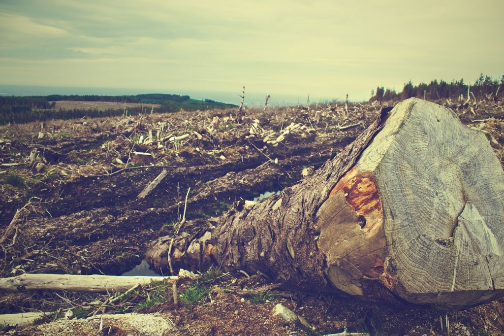 Eco-certificates create a market balancing framework among stakeholders that help curb deforestation. Image: Pixabay