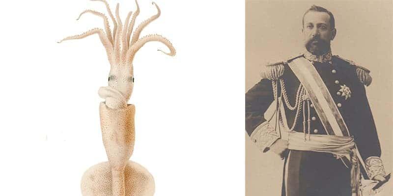 celebrity squid
