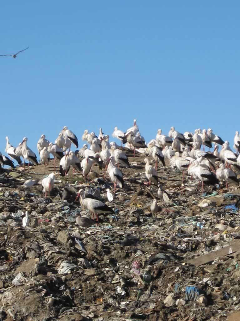 storks landfill
