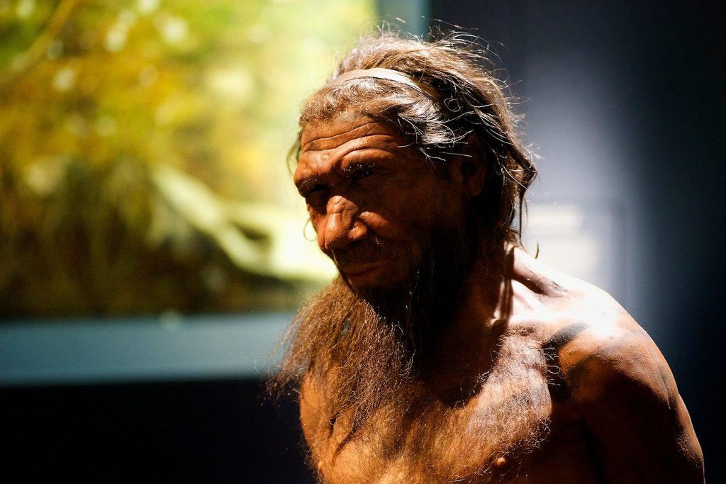 Neanderthal model on display at the Natural History Museum, London. Credit: Flickr user Paul Hudson