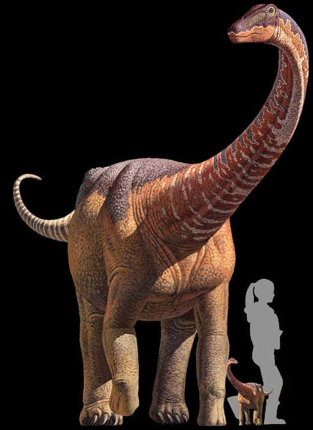 Rapetosaurus krausei adult and baby, alongside a human juvenile for comparison. Credit: KRISTI CURRY ROGERS