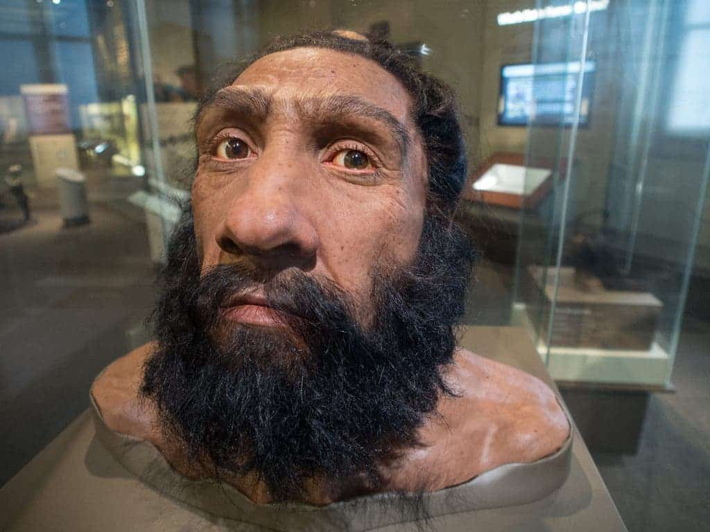 Bust of Neanderthal man. Credit: Flickr user Miles Barger