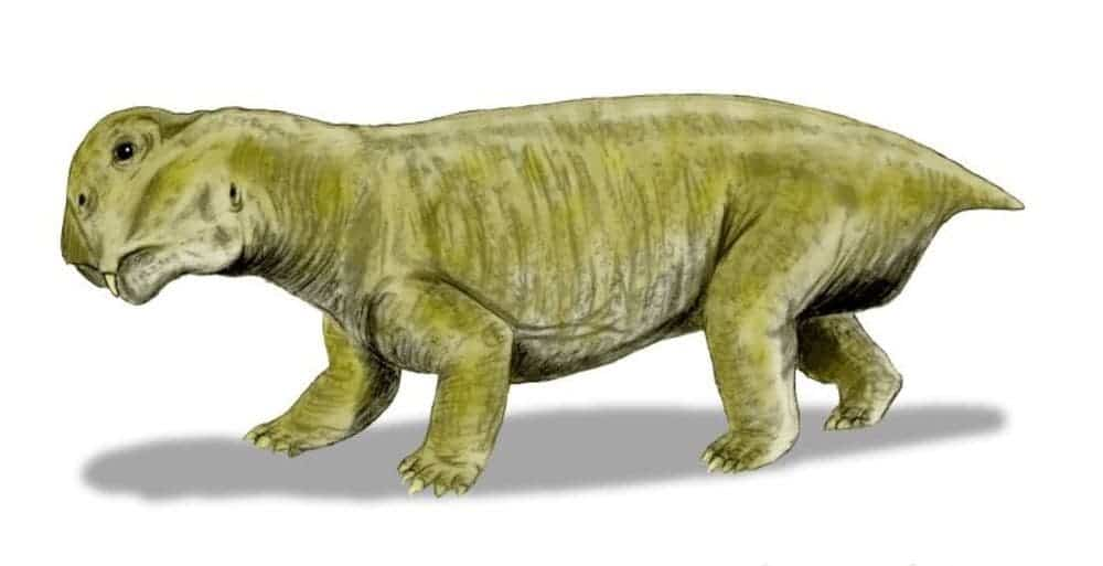 Artist impression of Lystrosaurus. Image: Nobu Tanura/Wikimedia