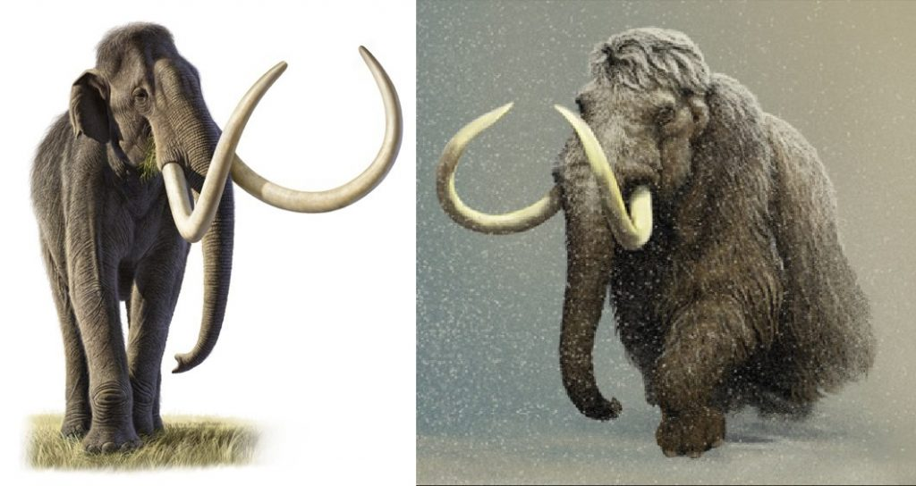 Left: Columbian Mammoth; Right: Woolly Mammoth. Credit: Raul Martin //  Carl Buell