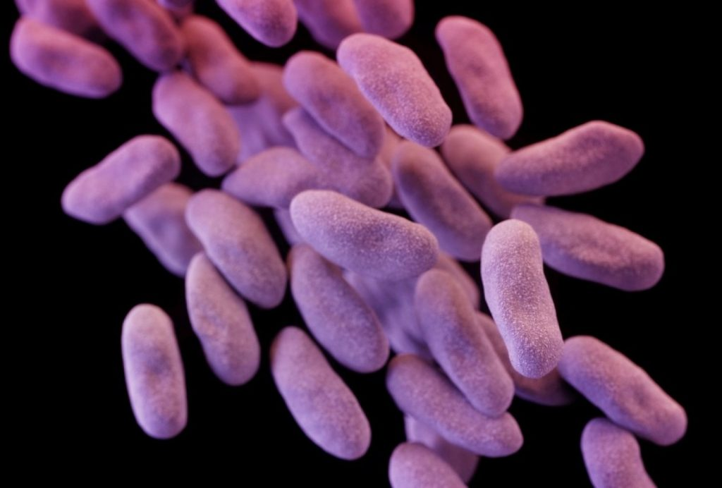 Bacteria family CRE causes infections that are often resistant to most antibiotics.Image credits Centers for Disease Control and Prevention/Reuters.