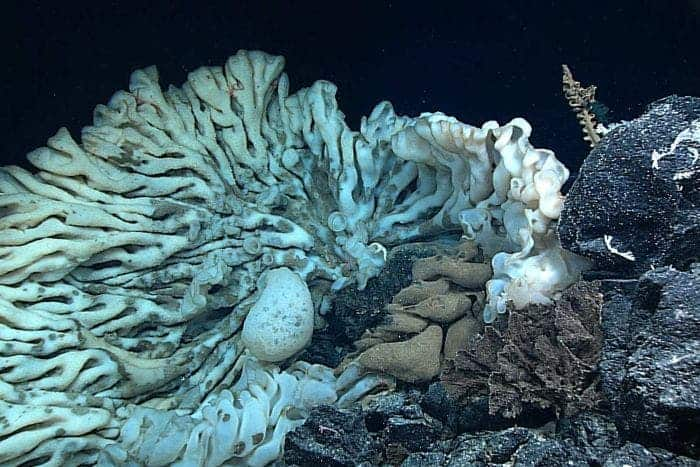 largest sea sponge