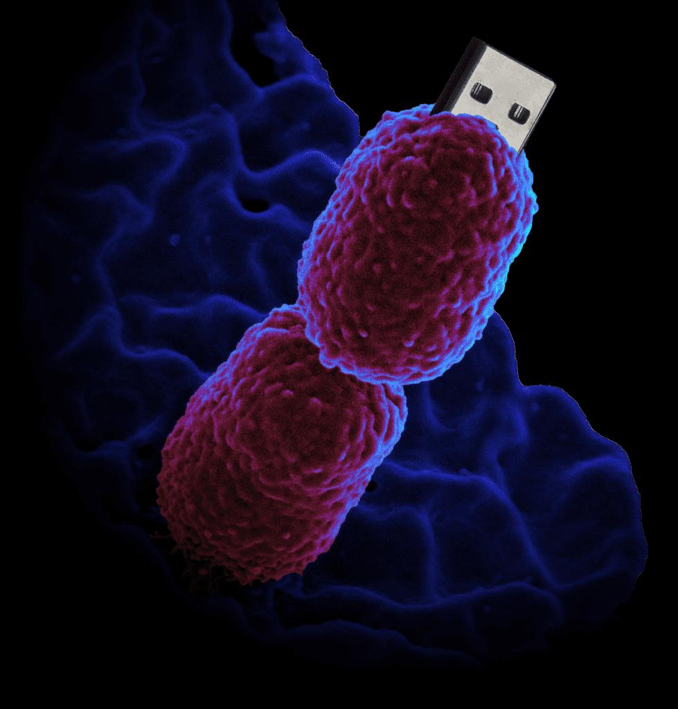 BacteriaUSB
