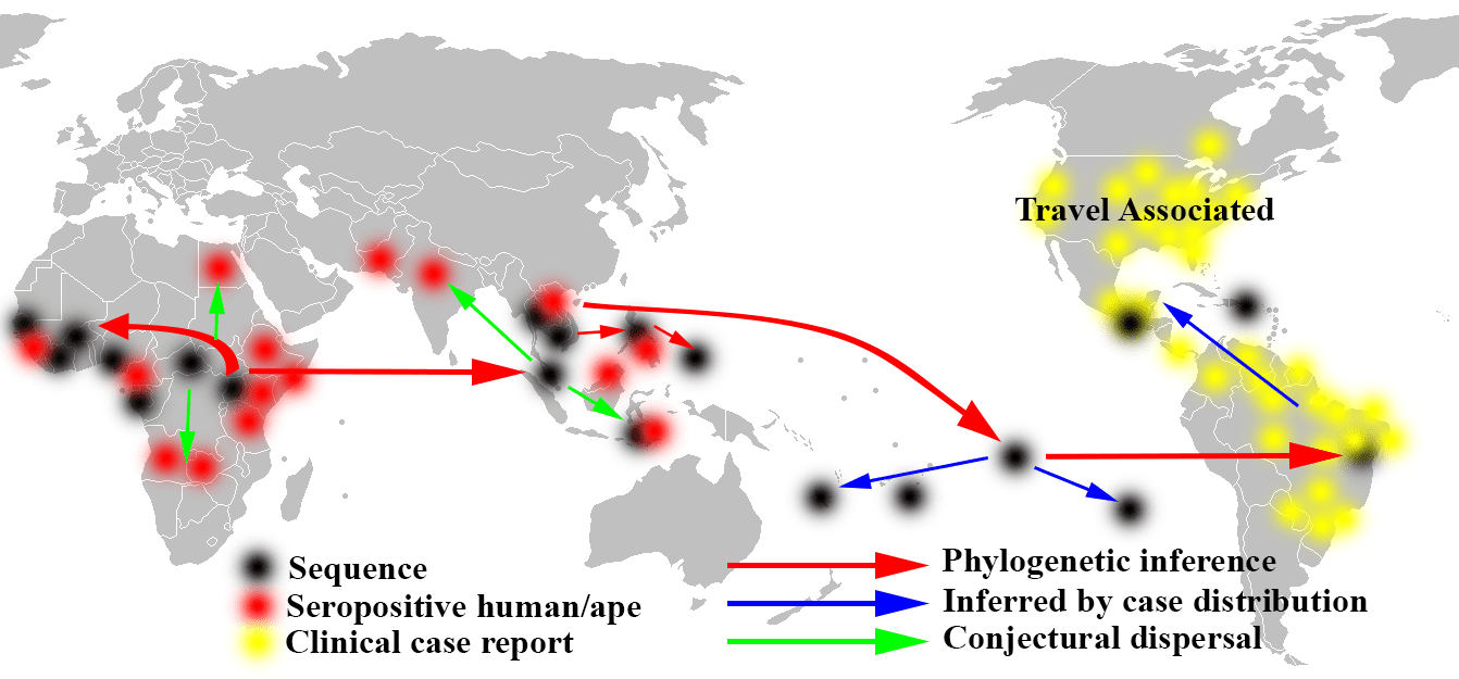 the origin and history of ebola virus The ebola virus is a zoonotic disease, meaning it spreads between animals and humans, in this case from fruit bats to humans once in humans, it easily spreads from person to person through contact with blood and other body fluids.