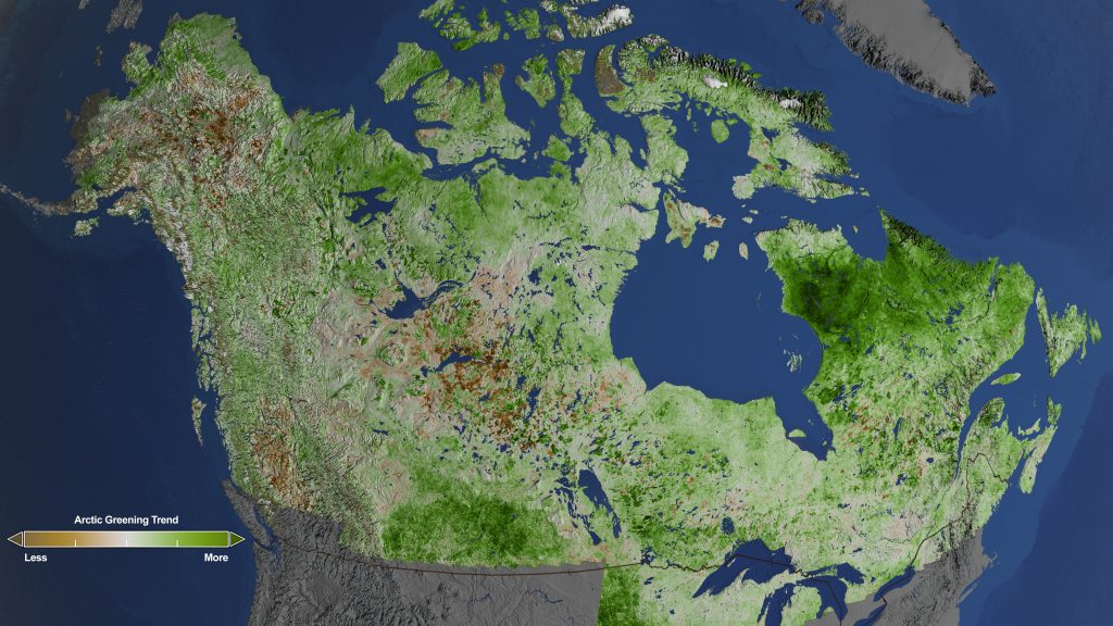 Rapidly increasing temperatures in the Arctic have led to longer growing seasons and changing soils for the plants. Scientists have observed grassy tundras changing to scrublands, and shrub growing bigger and denser. From 1984–2012, extensive greening has occurred in the tundra of Western Alaska, the northern coast of Canada, and the tundra of Quebec and Labrador. Credit: Credits: NASA's Goddard Space Flight Center/Cindy Starr